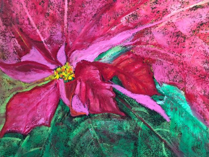 poinsettia dream